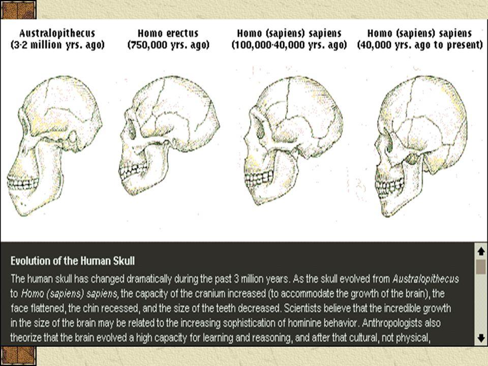 Fosil subhuman tertua adalah Australophitecus, wujudnya lebih menyerupai kera daripada manusia, kemudian muncul manusia kera dari Jawa, Pitecanthropus erectus yang hidup pada ± 500.000 tahun yang lalu, sudah lebih menyerupai manusia daripada kera, volume otaknya ± 1000 cc, sedang pada gorilla ± 600 cc dan pada manusia modern ± 1500 cc.