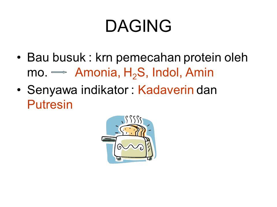 DAGING Bau busuk : krn pemecahan protein oleh mo.