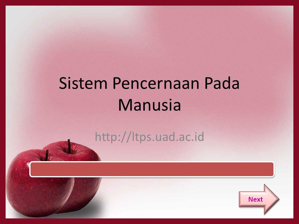 Sistem Pencernaan Pada Manusia http://ltps.uad.ac.id Next