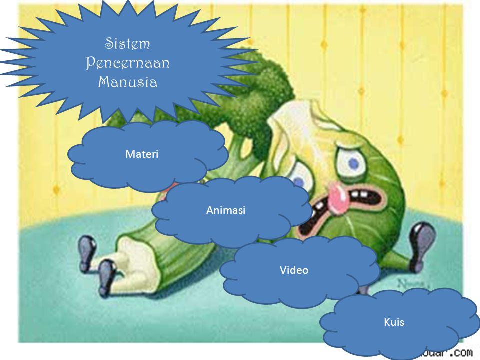 Rongga Mulut, Esofagus Usus Halus Lambung Gangguan Pencernaa Usus Dua Belas Jari Rektum & Anus Usus Besar MATERI Sistem pencernaan makanan pada manusia terdiri dari beberapa organ, berturut-turut dimulai dari
