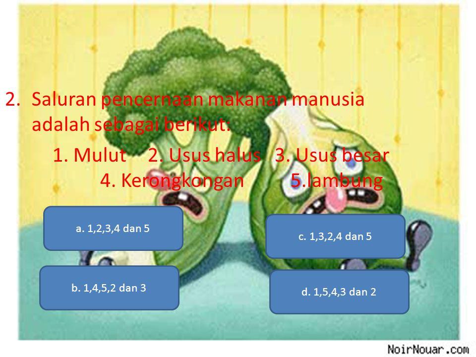 2.Saluran pencernaan makanan manusia adalah sebagai berikut: 1. Mulut2. Usus halus 3. Usus besar 4. Kerongkongan5.lambung a. 1,2,3,4 dan 5 b. 1,4,5,2