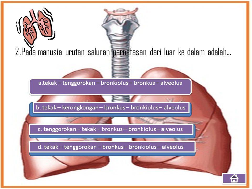 2.Pada manusia urutan saluran pernafasan dari luar ke dalam adalah… a.tekak – tenggorokan – bronkiolus – bronkus – alveolus b. tekak – kerongkongan –