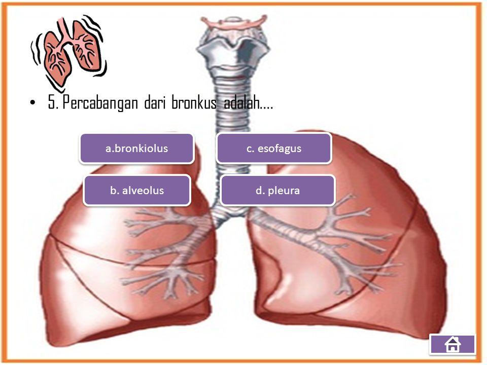 5. Percabangan dari bronkus adalah.... a.bronkiolus b. alveolus d. pleura c. esofagus