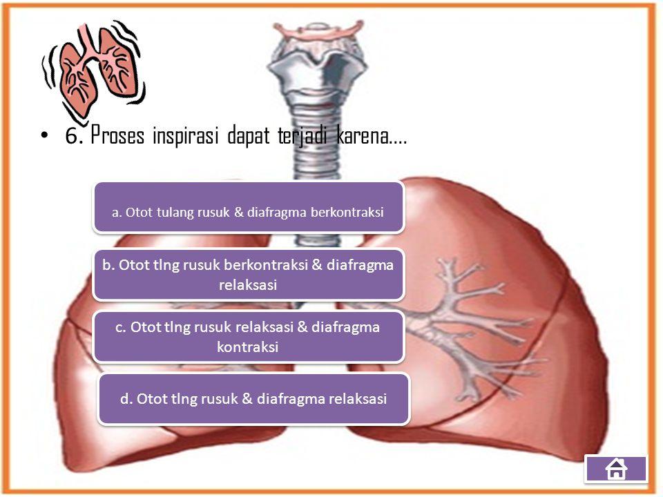 6. Proses inspirasi dapat terjadi karena.... a. Otot tulang rusuk & diafragma berkontraksi b. Otot tlng rusuk berkontraksi & diafragma relaksasi b. Ot
