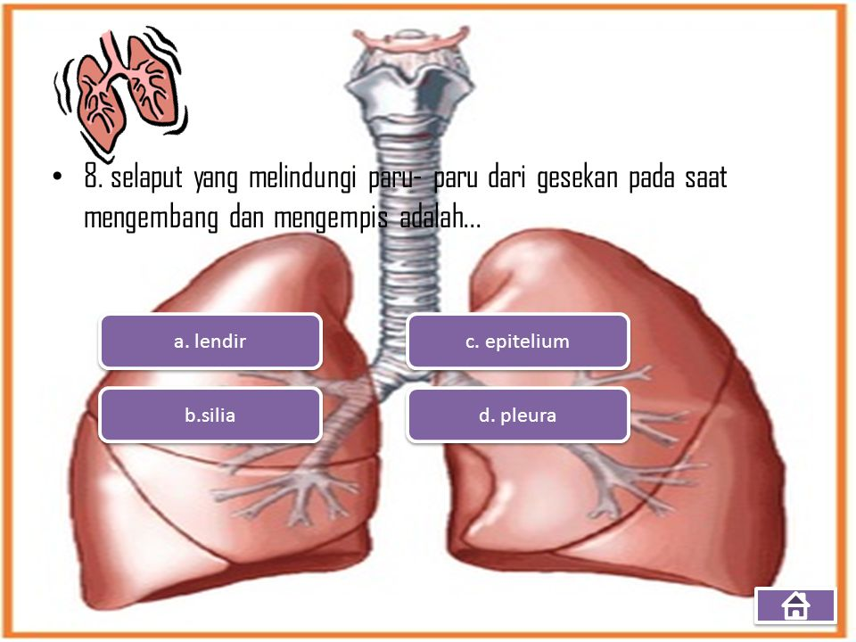 8. selaput yang melindungi paru- paru dari gesekan pada saat mengembang dan mengempis adalah... a. lendir b.silia d. pleura c. epitelium