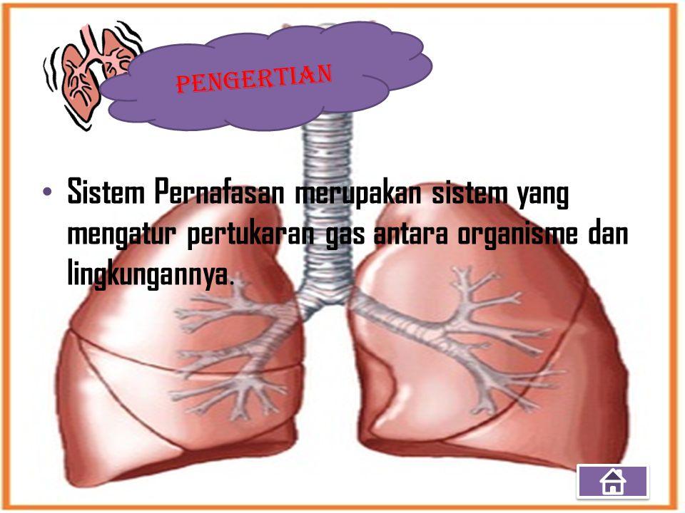 Sistem Pernafasan merupakan sistem yang mengatur pertukaran gas antara organisme dan lingkungannya.