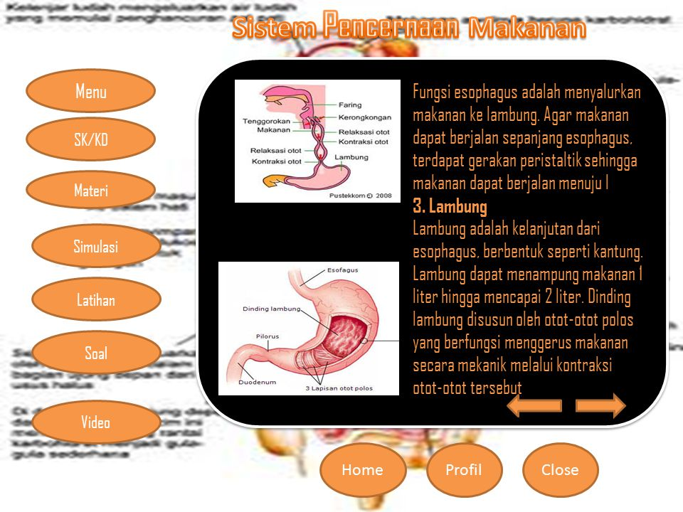 Menu HomeProfilClose Materi Simulasi Latihan Soal SK/KD Video Fungsi esophagus adalah menyalurkan makanan ke lambung. Agar makanan dapat berjalan sepa