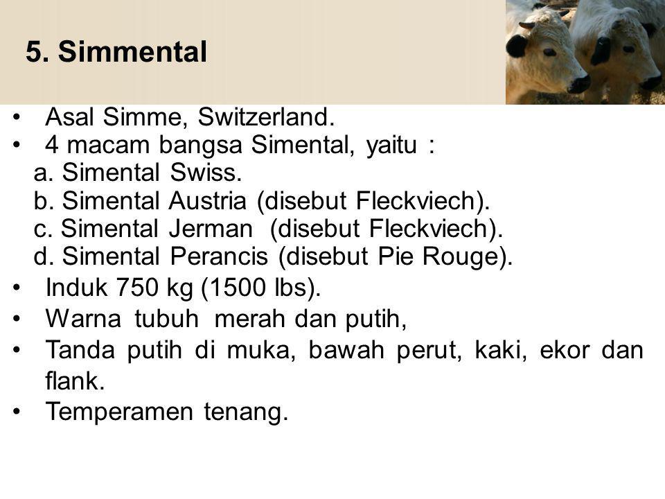 5. Simmental Asal Simme, Switzerland. 4 macam bangsa Simental, yaitu : a. Simental Swiss. b. Simental Austria (disebut Fleckviech). c. Simental Jerman