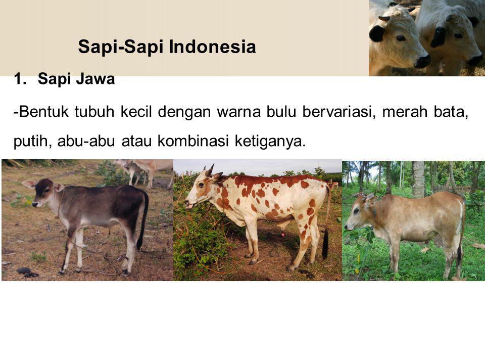 Sapi-Sapi Indonesia 1.Sapi Jawa -Bentuk tubuh kecil dengan warna bulu bervariasi, merah bata, putih, abu-abu atau kombinasi ketiganya.