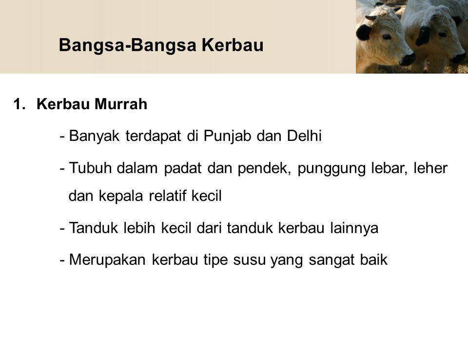 Bangsa-Bangsa Kerbau 1.Kerbau Murrah - Banyak terdapat di Punjab dan Delhi - Tubuh dalam padat dan pendek, punggung lebar, leher dan kepala relatif ke