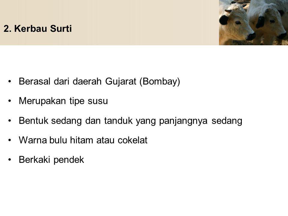 2. Kerbau Surti Berasal dari daerah Gujarat (Bombay) Merupakan tipe susu Bentuk sedang dan tanduk yang panjangnya sedang Warna bulu hitam atau cokelat