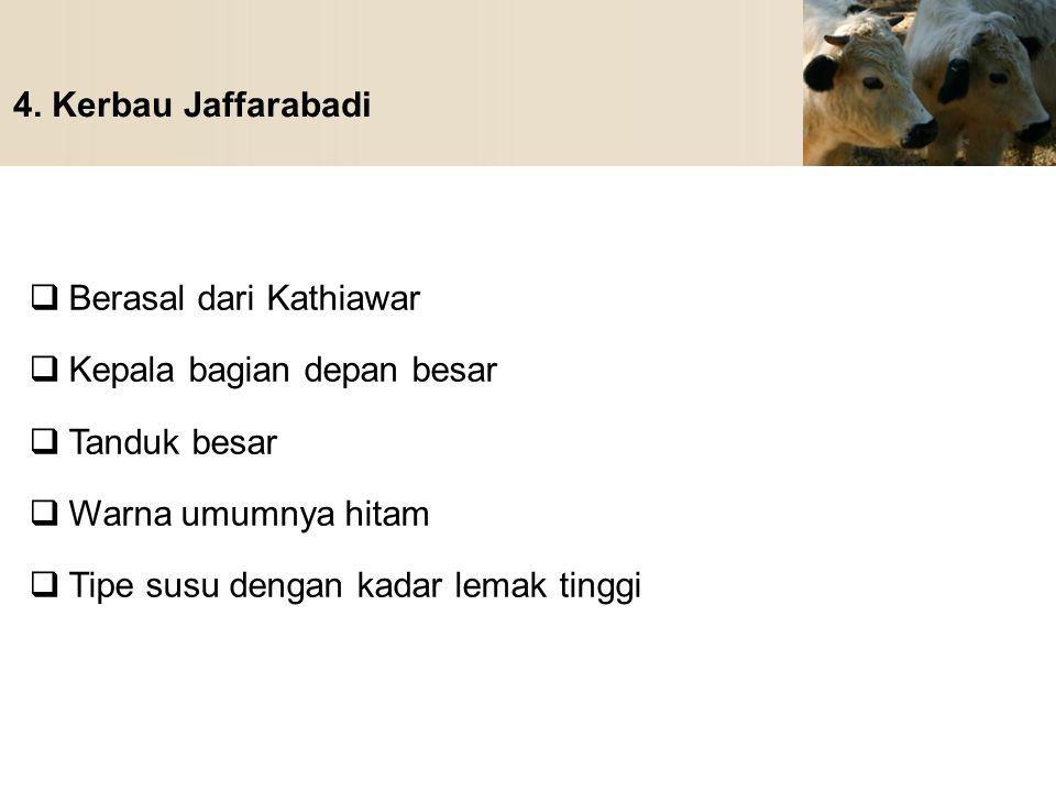 4. Kerbau Jaffarabadi  Berasal dari Kathiawar  Kepala bagian depan besar  Tanduk besar  Warna umumnya hitam  Tipe susu dengan kadar lemak tinggi