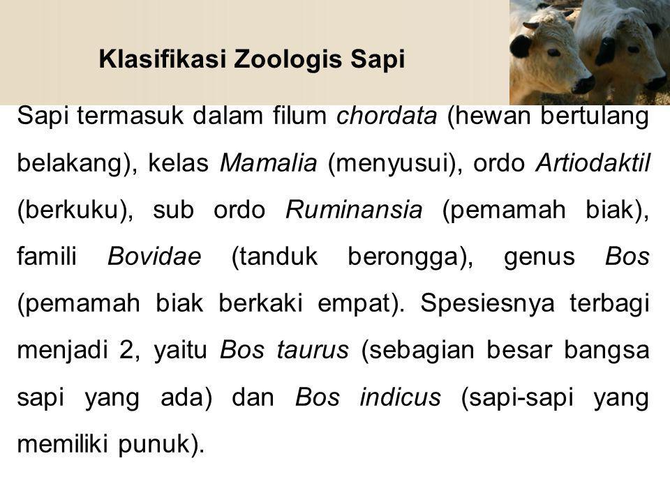 Klasifikasi Zoologis Sapi Sapi termasuk dalam filum chordata (hewan bertulang belakang), kelas Mamalia (menyusui), ordo Artiodaktil (berkuku), sub ord