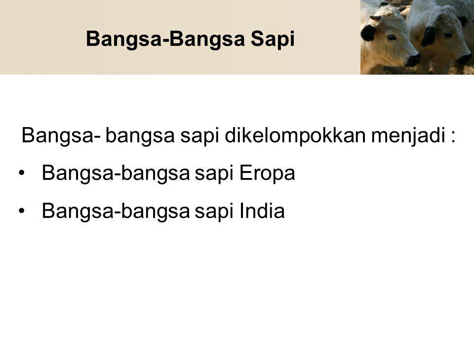 Bangsa-Bangsa Sapi Bangsa- bangsa sapi dikelompokkan menjadi : Bangsa-bangsa sapi Eropa Bangsa-bangsa sapi India