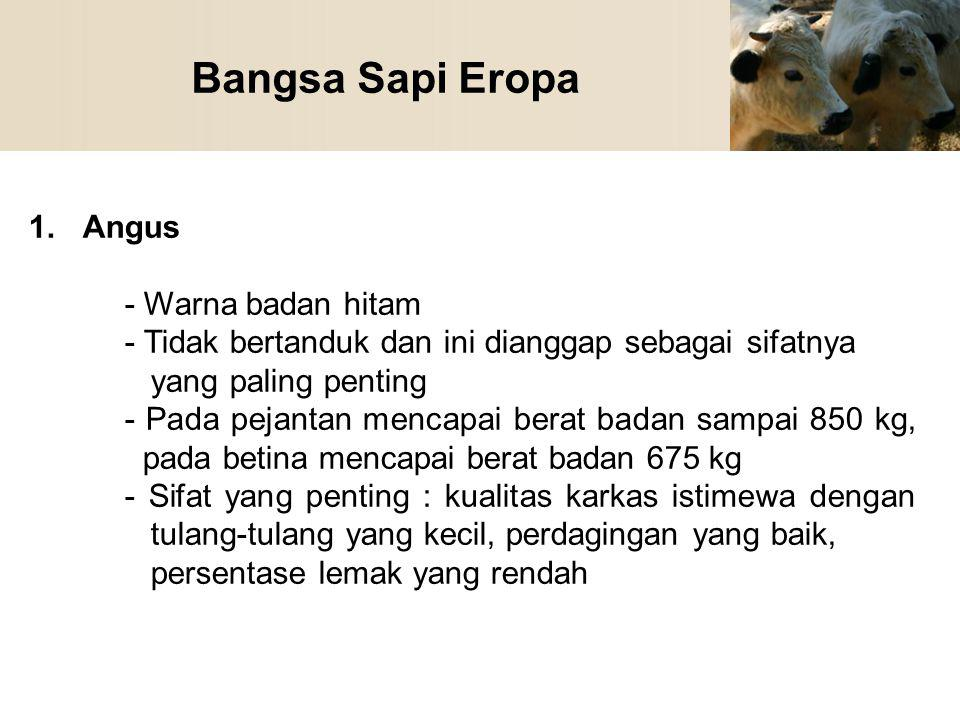 Bangsa Sapi Eropa 1.Angus - Warna badan hitam - Tidak bertanduk dan ini dianggap sebagai sifatnya yang paling penting - Pada pejantan mencapai berat b