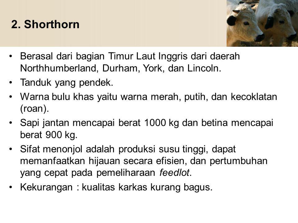 2. Shorthorn Berasal dari bagian Timur Laut Inggris dari daerah Northhumberland, Durham, York, dan Lincoln. Tanduk yang pendek. Warna bulu khas yaitu
