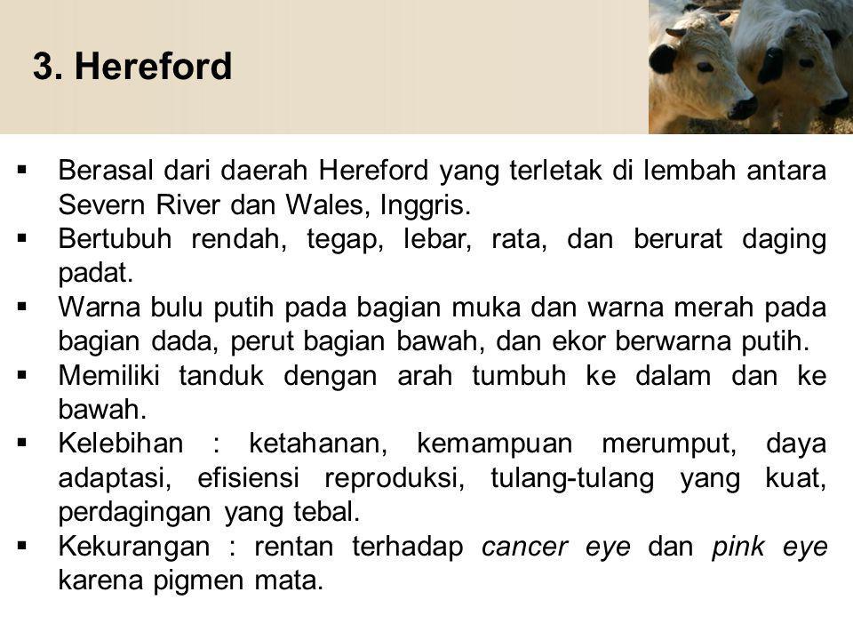 3. Hereford  Berasal dari daerah Hereford yang terletak di lembah antara Severn River dan Wales, Inggris.  Bertubuh rendah, tegap, lebar, rata, dan