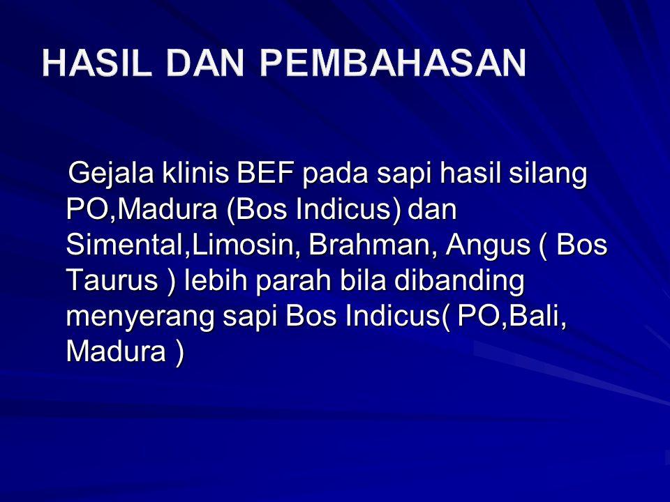 Gejala klinis BEF pada sapi hasil silang PO,Madura (Bos Indicus) dan Simental,Limosin, Brahman, Angus ( Bos Taurus ) lebih parah bila dibanding menyerang sapi Bos Indicus( PO,Bali, Madura )