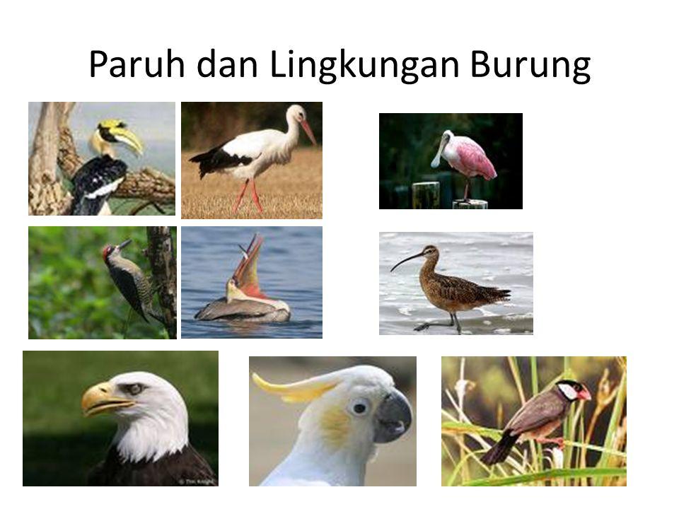 Paruh dan Lingkungan Burung