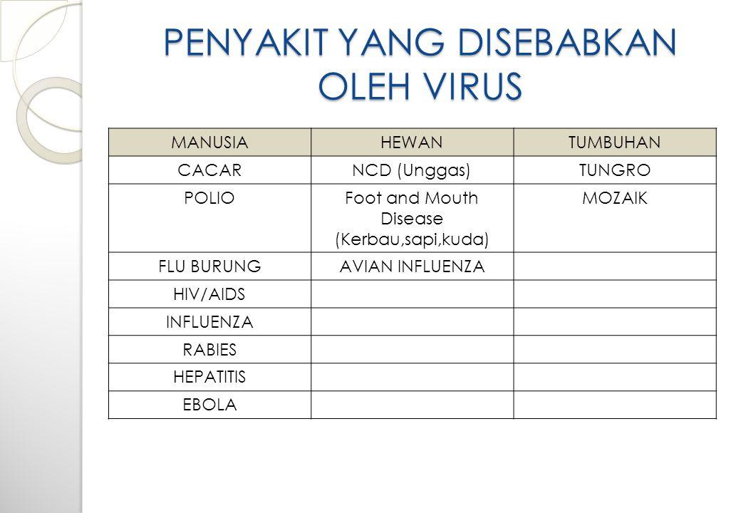 PERANAN VIRUS DALAM KEHIDUPAN Walaupun virus dalam kehidupan ini lebih banya bersifat merugikan, namun masih ada juga virus yang dapat dimanfaatkan ol