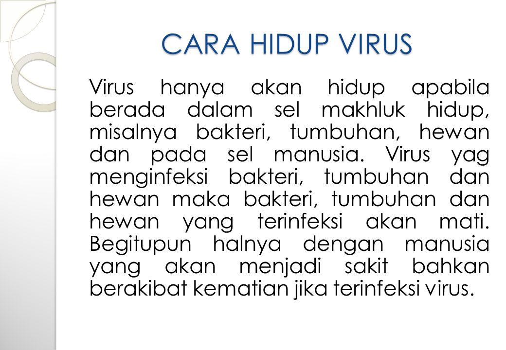 CARA HIDUP VIRUS Virus hanya akan hidup apabila berada dalam sel makhluk hidup, misalnya bakteri, tumbuhan, hewan dan pada sel manusia.
