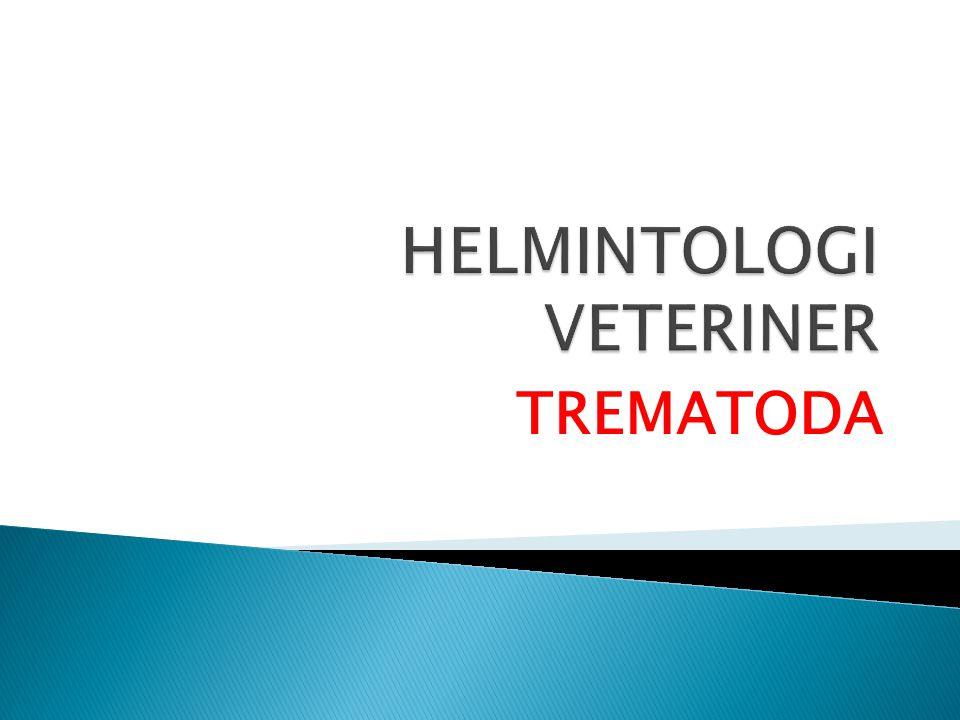 TREMATODA