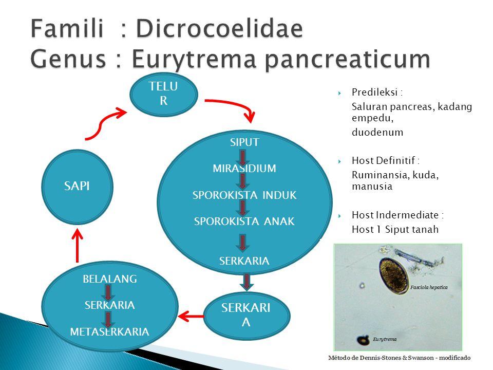  Predileksi : Saluran pancreas, kadang empedu, duodenum  Host Definitif : Ruminansia, kuda, manusia  Host Indermediate : Host 1 Siput tanah Host 2