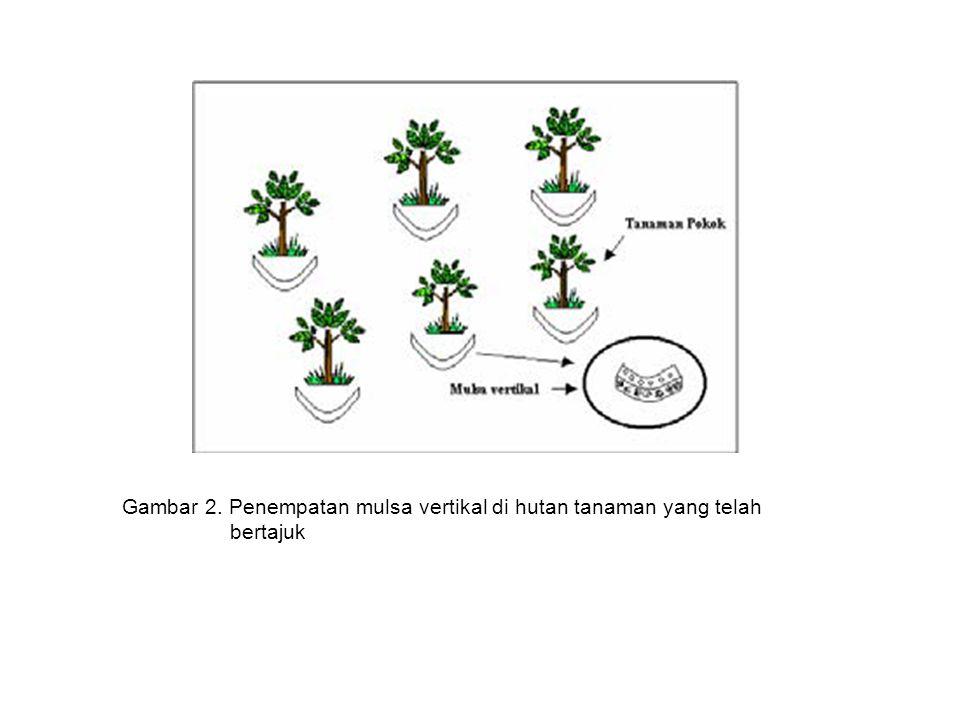 Gambar 2. Penempatan mulsa vertikal di hutan tanaman yang telah bertajuk