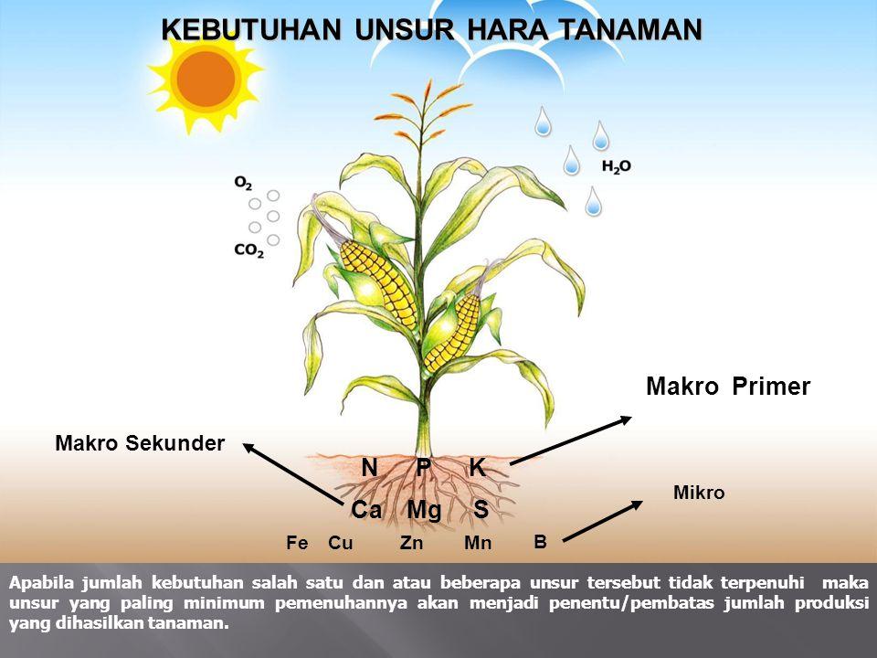 PESTISIDA NABATI Adalah : Pestisida yang bahan dasarnya berasal dari tanaman / tumbuhan berupa larutan hasil perasan, rendaman, ekstrak, rebusan dari bagian tanaman ( akar, umbi, daun, biji, buah ) KEKUATAN / KEUNTUNGAN : - Murah, bahan tersedia di alam - Aman, tidak berbahaya bagi lingkungan - Tidak meninggalkan residu