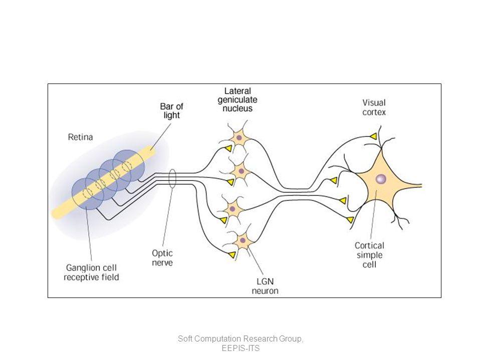 Struktur Jaringan pada Otak Neuron adalah satuan unit pemroses terkecil pada otak Bentuk standard ini mungkin dikemudian hari akan berubah Jaringan otak manusia tersusun tidak kurang dari 10 13 buah neuron yang masing-masing terhubung oleh sekitar 10 15 buah dendrite Fungsi dendrite adalah sebagai penyampai sinyal dari neuron tersebut ke neuron yang terhubung dengannya Sebagai keluaran, setiap neuron memiliki axon, sedangkan bagian penerima sinyal disebut synapse Sebuah neuron memiliki 1000-10.000 synapse Penjelasan lebih rinci tentang hal ini dapat diperoleh pada disiplin ilmu biology molecular Secara umum jaringan saraf terbentuk dari jutaan (bahkan lebih) struktur dasar neuron yang terinterkoneksi dan terintegrasi antara satu dengan yang lain sehingga dapat melaksanakan aktifitas secara teratur dan terus menerus sesuai dengan kebutuhan Soft Computation Research Group, EEPIS-ITS