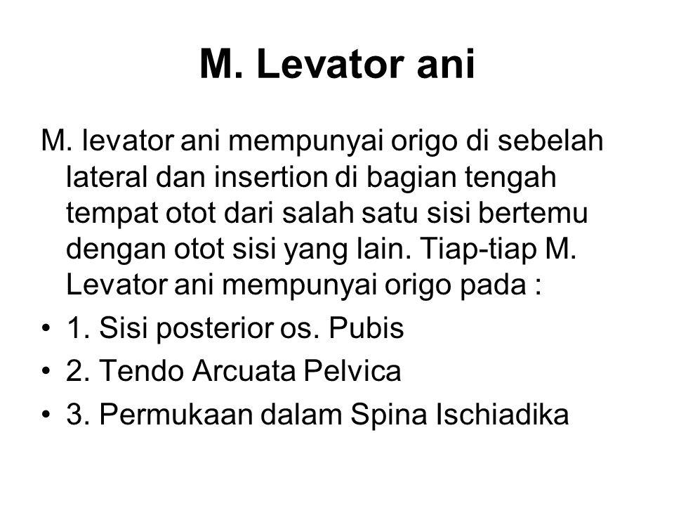 M. Levator ani M. levator ani mempunyai origo di sebelah lateral dan insertion di bagian tengah tempat otot dari salah satu sisi bertemu dengan otot s