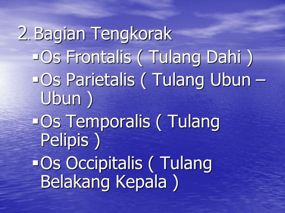 2. Bagian Tengkorak OOOOs Frontalis ( Tulang Dahi ) OOOOs Parietalis ( Tulang Ubun – Ubun ) OOOOs Temporalis ( Tulang Pelipis ) OOOOs