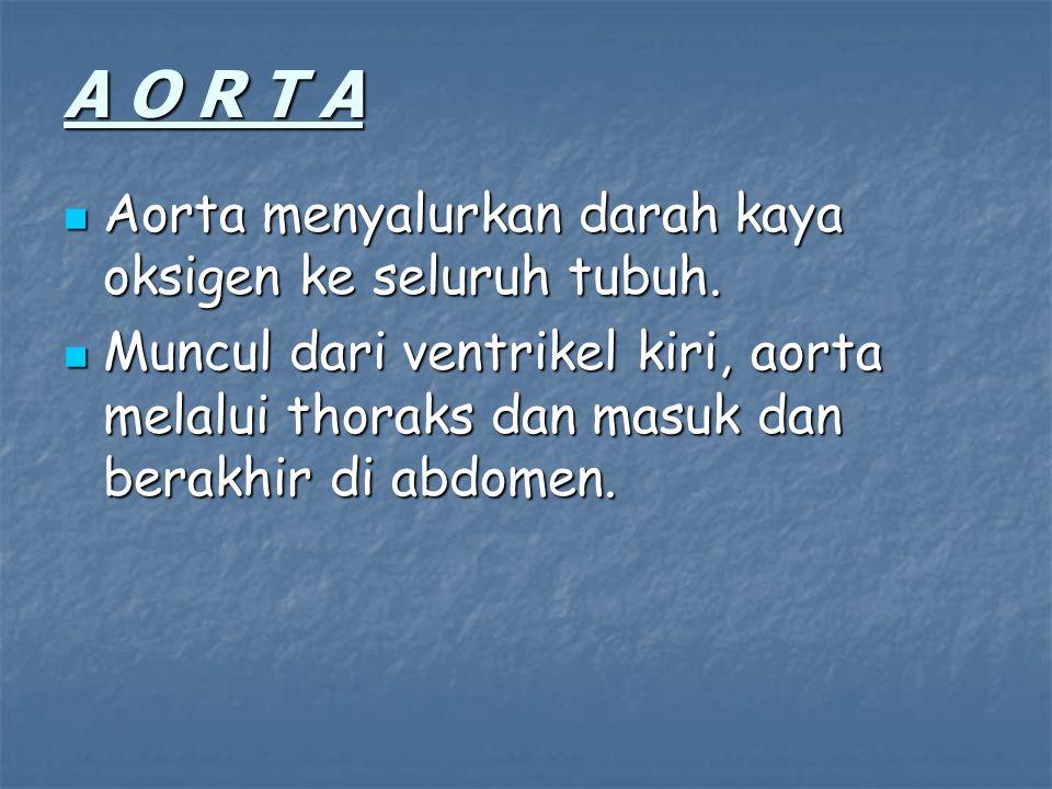 A O R T A Aorta menyalurkan darah kaya oksigen ke seluruh tubuh. Aorta menyalurkan darah kaya oksigen ke seluruh tubuh. Muncul dari ventrikel kiri, ao