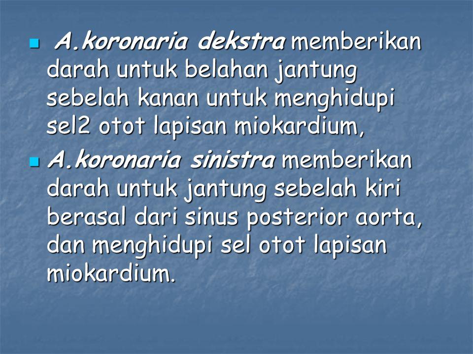A.koronaria dekstra memberikan darah untuk belahan jantung sebelah kanan untuk menghidupi sel2 otot lapisan miokardium, A.koronaria dekstra memberikan darah untuk belahan jantung sebelah kanan untuk menghidupi sel2 otot lapisan miokardium, A.koronaria sinistra memberikan darah untuk jantung sebelah kiri berasal dari sinus posterior aorta, dan menghidupi sel otot lapisan miokardium.