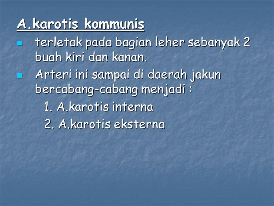 A.karotis kommunis terletak pada bagian leher sebanyak 2 buah kiri dan kanan. terletak pada bagian leher sebanyak 2 buah kiri dan kanan. Arteri ini sa