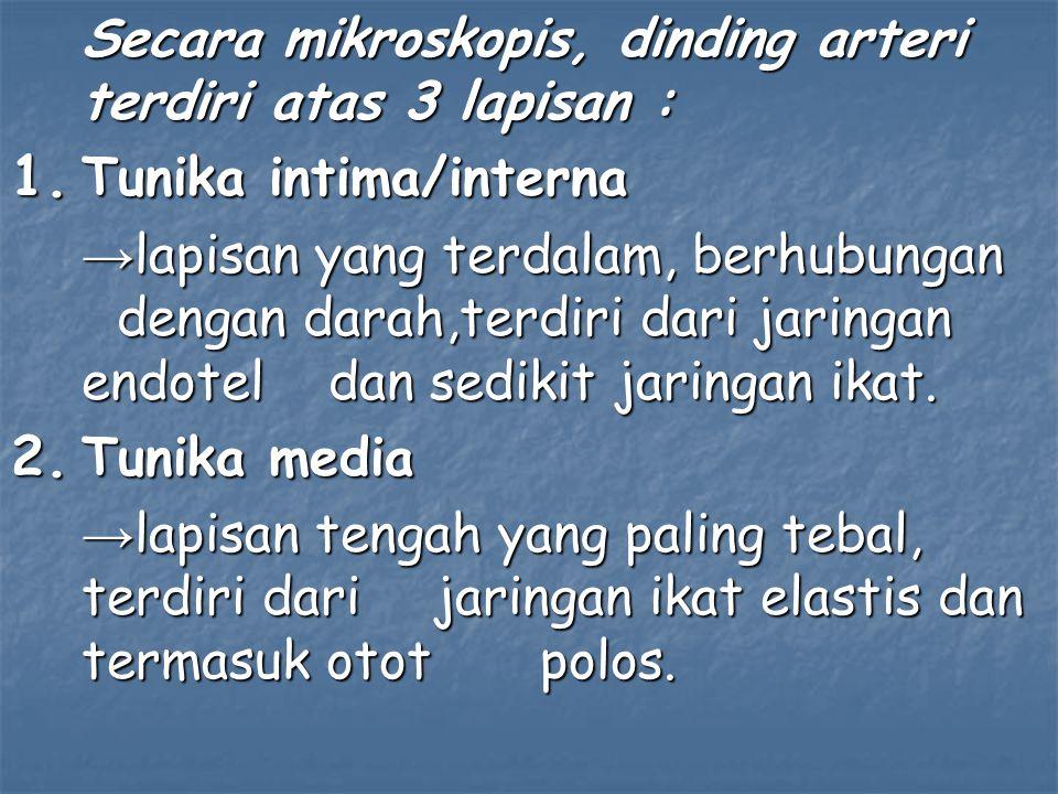 A.iliaka eksterna : Merupakan arteri yang lebih besar dari A.iliaka interna.