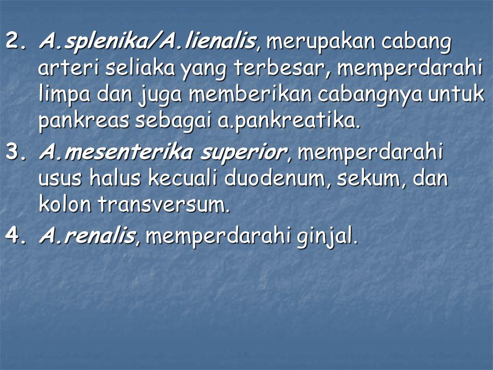 2.A.splenika/A.lienalis, merupakan cabang arteri seliaka yang terbesar, memperdarahi limpa dan juga memberikan cabangnya untuk pankreas sebagai a.pankreatika.