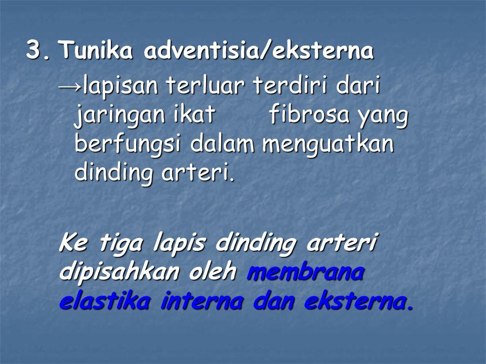 3. Tunika adventisia/eksterna → lapisan terluar terdiri dari jaringan ikat fibrosa yang berfungsi dalam menguatkan dinding arteri. Ke tiga lapis dindi