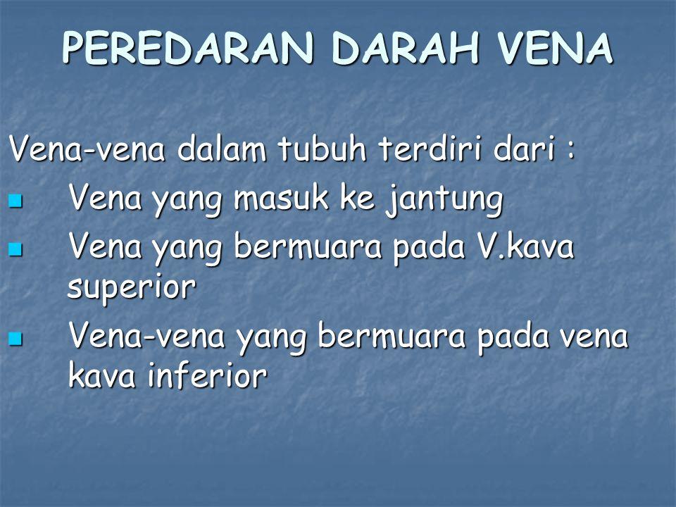 PEREDARAN DARAH VENA Vena-vena dalam tubuh terdiri dari : Vena yang masuk ke jantung Vena yang masuk ke jantung Vena yang bermuara pada V.kava superior Vena yang bermuara pada V.kava superior Vena-vena yang bermuara pada vena kava inferior Vena-vena yang bermuara pada vena kava inferior