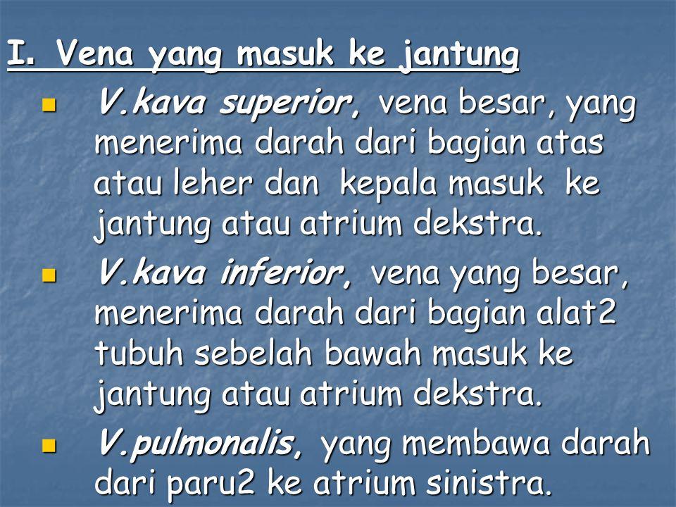 I. Vena yang masuk ke jantung V.kava superior, vena besar, yang menerima darah dari bagian atas atau leher dan kepala masuk ke jantung atau atrium dek