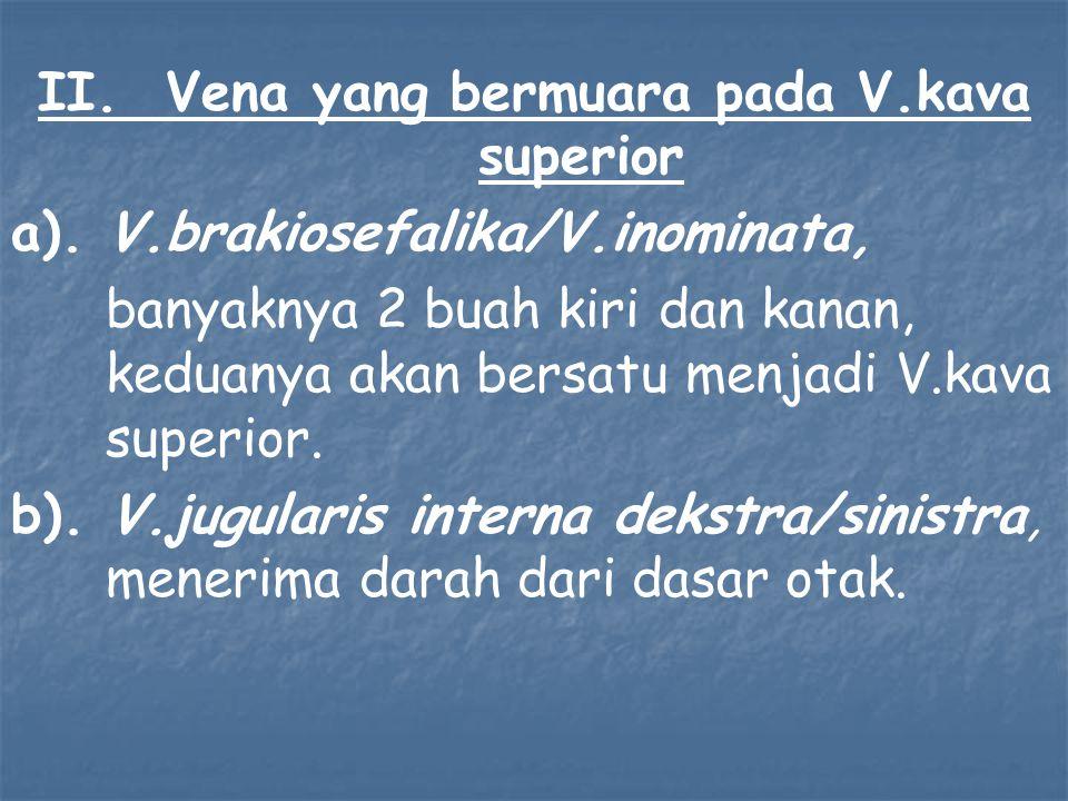 II. Vena yang bermuara pada V.kava superior a). V.brakiosefalika/V.inominata, banyaknya 2 buah kiri dan kanan, keduanya akan bersatu menjadi V.kava su