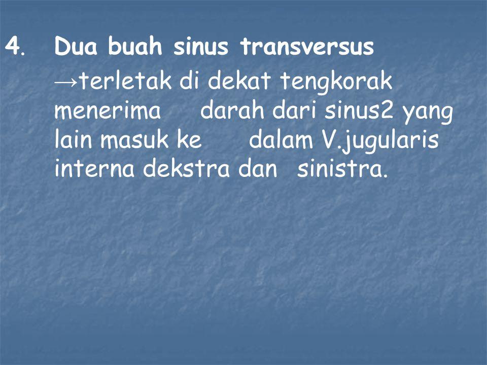 4.Dua buah sinus transversus → terletak di dekat tengkorak menerima darah dari sinus2 yang lain masuk ke dalam V.jugularis interna dekstra dan sinistra.