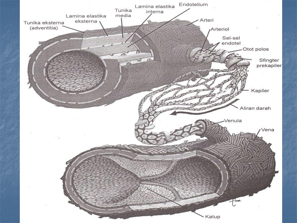Perbedaan pembuluh darah arteri dan vena Arteri : M'bawa darah bersih(≠a.pulmonalis) M'bawa darah bersih(≠a.pulmonalis) Dinding yang tebal Dinding yang tebal Dinding jaringan yang elastis Dinding jaringan yang elastis Katup hanya pada permulaan keluar dari jantung Katup hanya pada permulaan keluar dari jantung Menunjukan adanya tempat untuk mendengarkan denyut jantung Menunjukan adanya tempat untuk mendengarkan denyut jantung