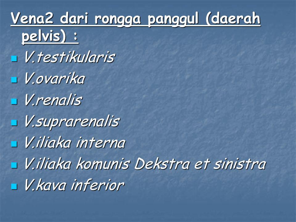 Vena2 dari rongga panggul (daerah pelvis) : V.testikularis V.testikularis V.ovarika V.ovarika V.renalis V.renalis V.suprarenalis V.suprarenalis V.ilia