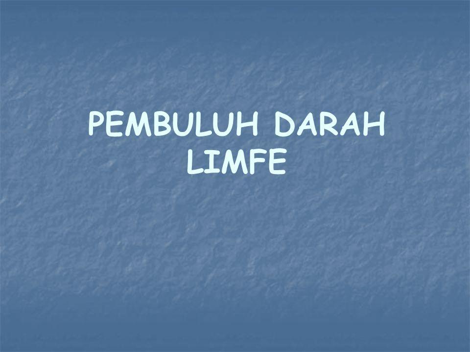 PEMBULUH DARAH LIMFE