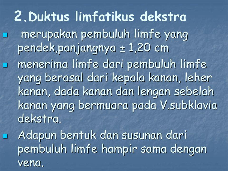 2. 2. Duktus limfatikus dekstra merupakan pembuluh limfe yang pendek,panjangnya ± 1,20 cm merupakan pembuluh limfe yang pendek,panjangnya ± 1,20 cm me