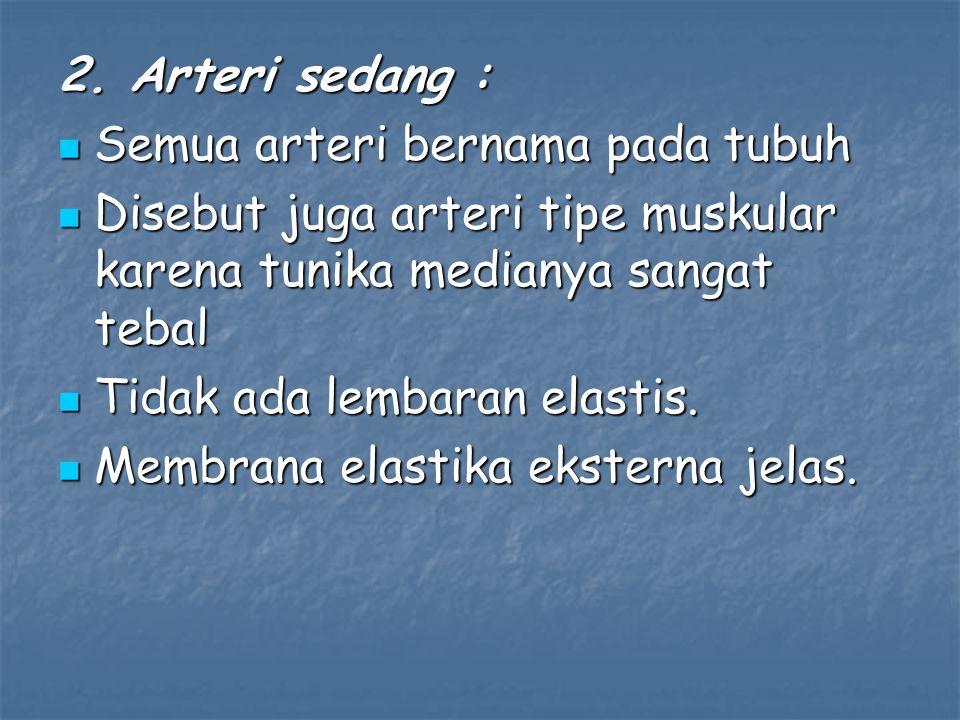 3.Arteri kecil : Tidak memiliki membrana elastika eksterna.