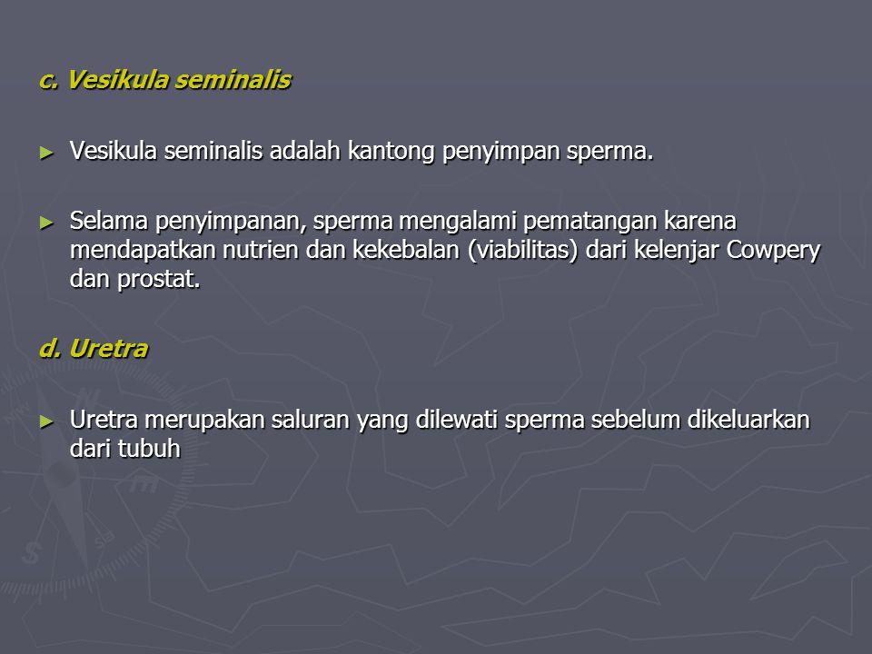 c. Vesikula seminalis ► Vesikula seminalis adalah kantong penyimpan sperma. ► Selama penyimpanan, sperma mengalami pematangan karena mendapatkan nutri