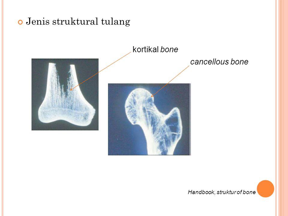 Jenis struktural tulang kortikal bone cancellous bone Handbook, struktur of bone