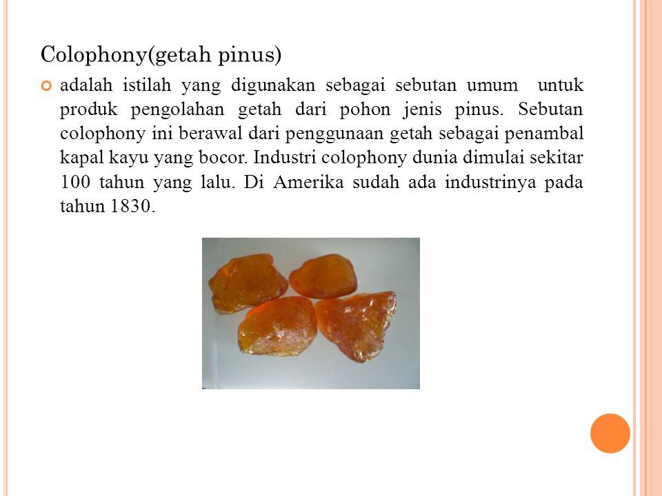 Colophony(getah pinus) adalah istilah yang digunakan sebagai sebutan umum untuk produk pengolahan getah dari pohon jenis pinus. Sebutan colophony ini